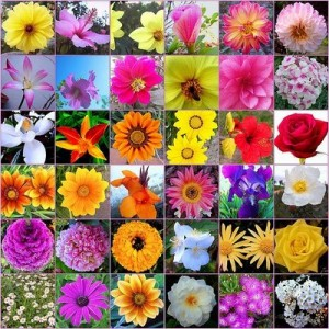 flores_de_bach