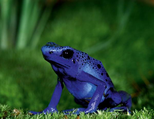 Fotos, de bellas ranas en extinción - Mi ventana